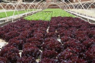 Kunia Country Farms Aquaponics