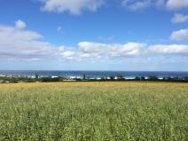Sunn Hemp Fields-North Shore