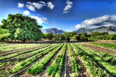 Kahumanan Organic Farm _ PC-Kahumana Organic Farm
