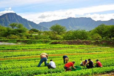 Oahu-Organic-Farms